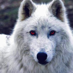 Winter is Coming: Dyre Wolf Malware Can Leave Your Bank Account Looking Stark
